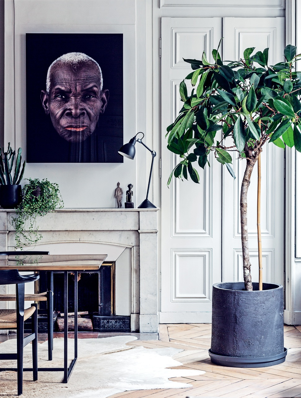 vogue-living-how-to-choose-the-perfect-plant-for-your-home-interior_interior-classic-paris-white_interior-design_interior-design-atlanta-online-institute-how-much-do-designers-make-ide