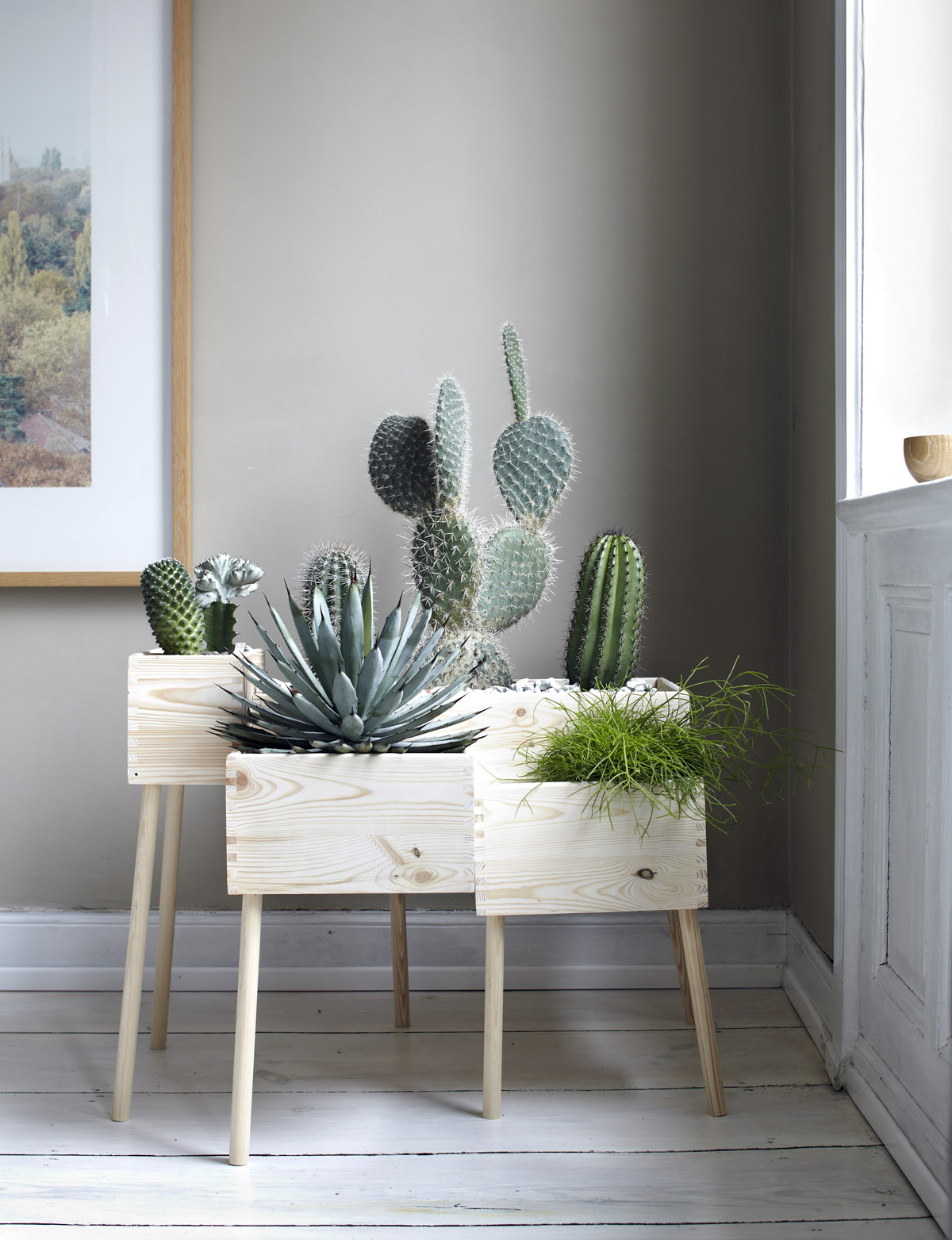 1479875013-winter-home-tips-plant